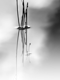 Silence Reprodukcja zdjęcia autor Ursula Abresch