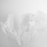 Doug Chinnery - Oh So White Fotografická reprodukce