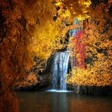 Philippe Sainte-Laudy - Nature's Gold - Fotografik Baskı