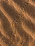 Sand Prints II Photographic Print by Art Wolfe