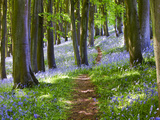 Ein Spaziergang im Wald Fotodruck von Doug Chinnery