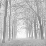 Forest in White Photographic Print by Doug Chinnery