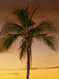 Bora Bora Palms Photographic Print by Art Wolfe