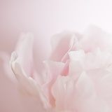 Softly Pink Fotodruck von Doug Chinnery