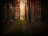 Red Autumn Papier Photo par Philippe Manguin