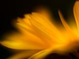 Orangesque Photographic Print by Ursula Abresch