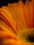 Vibrant Orange Photographic Print by Doug Chinnery