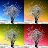 Four Seasons Photographic Print by Philippe Sainte-Laudy