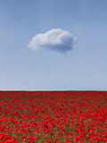 Poppylicious Photographic Print by Doug Chinnery