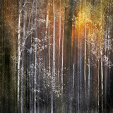 Nothing Gold Can Stay Fotoprint av Ursula Abresch