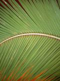 Bora Bora Palms+C206 Photographic Print by Art Wolfe