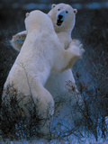 Let's Dance Photographic Print by Art Wolfe