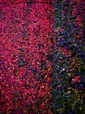 Bed of Flowers Photographic Print by Doug Chinnery