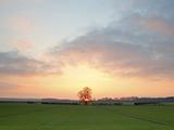 Morning Glory II Photographic Print by Doug Chinnery