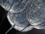 Seedlings Reproduction photographique par Ursula Abresch