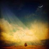 Echo van een zucht Fotoprint van Philippe Sainte-Laudy