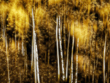 Golden Photographic Print by Ursula Abresch