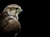 Predator Stampa fotografica di Doug Chinnery