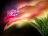 Extreme Dew Fotodruck von Ursula Abresch