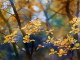 Döda löv Fotoprint av Ursula Abresch