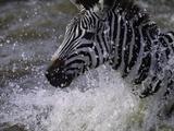 Splash - Eine Jungfrau am Haken, Englisch Fotografie-Druck von Art Wolfe