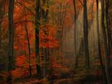 Die Poesie der Farben Fotodruck von Philippe Sainte-Laudy