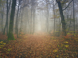 Autumn Forest Photographic Print by Philippe Manguin