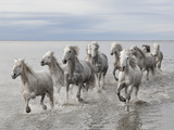 Marco Carmassi - Run on the Water Fotografická reprodukce