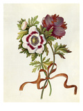 Anemones Giclee Print by James Bolton