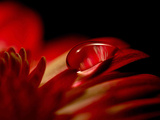 Red Drop Photographic Print by Philippe Sainte-Laudy