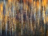 An Autumn Song Fotodruck von Ursula Abresch