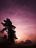 Evening Glory Photographic Print by Doug Chinnery