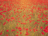 Wandering in Crimson Dreams Photographic Print by Doug Chinnery