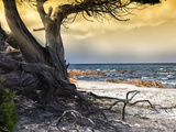 The Old Tree and the Sea Photographie par Marco Carmassi