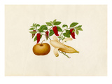 Capsicum annuum, Musa × paradisiaca and Pyrus pyrifolia Giclee Print by  Wang Lui Chi