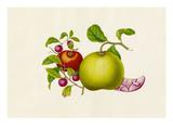 Citrus maxima, Diospyros kaki, Litchi chinensis Giclee Print by  Wang Lui Chi