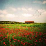 Red Field Fotografie-Druck von Philippe Sainte-Laudy