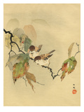 Sparrows with autumn leaves Giclée-Druck
