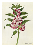 A Balsam Giclee Print by James Bolton