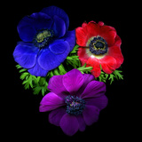 Anemone Photographic Print by Magda Indigo