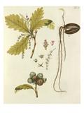 Die Eiche Giclee Print by Johann Simon Kerner