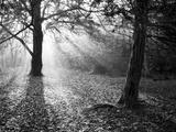 Autumn Burst Fotografisk trykk av Doug Chinnery