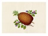 Ananas comosus, Vaccinium myrtillus Giclee Print by  Wang Lui Chi