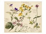 Wildflower composite Reproduction procédé giclée par Lilian Snelling