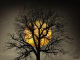 Sunset Behind a Tree Stampa fotografica di Marco Carmassi