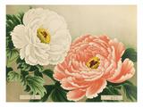 No. 3 Kigyoku and No. 4 Akashigata Giclee Print
