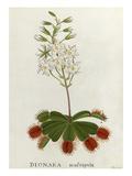 Dionaea muscipula, Venus Fly-Trap Reproduction procédé giclée par James Bolton