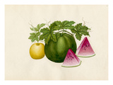 Citrullus lanatus, Cucumis melo Giclee Print by  Wang Lui Chi
