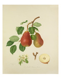 The Scarlet Bueree Pear Lámina giclée por William Hooker