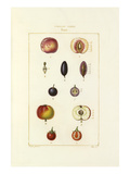 Tableau XXVIII. Fruits Giclee Print by Pierre Jean François Turpin